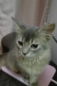 池袋ビスケッツ名物猫byまなみ姫