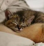 添い寝リフレガール ぴゅあGAL 赤羽 添い寝